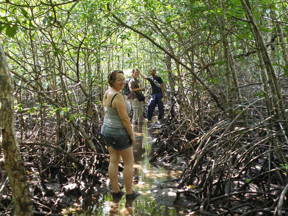Jungle Trekking on Koh Ra