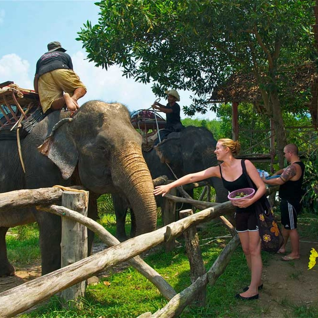 Elephants of Khao Lak