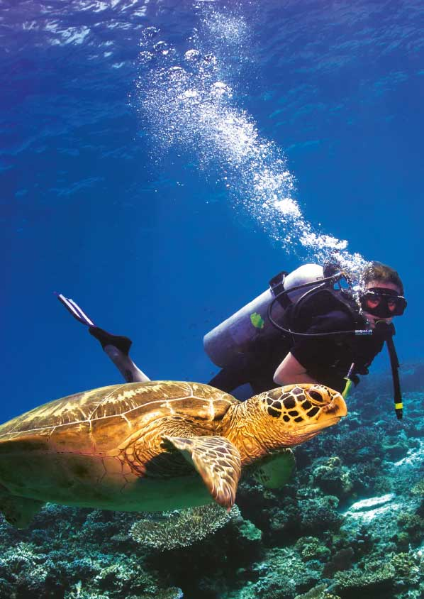 Scuba diver with a turtle