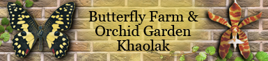 Butterfly Farm and Orchid Garden Banner Ad