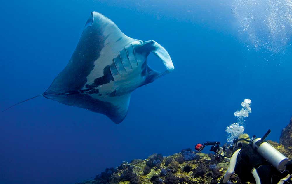 Jannik D. Pedersen photographing giant mantas in the Andaman Sea Photo © Dr. Andrea Marshall