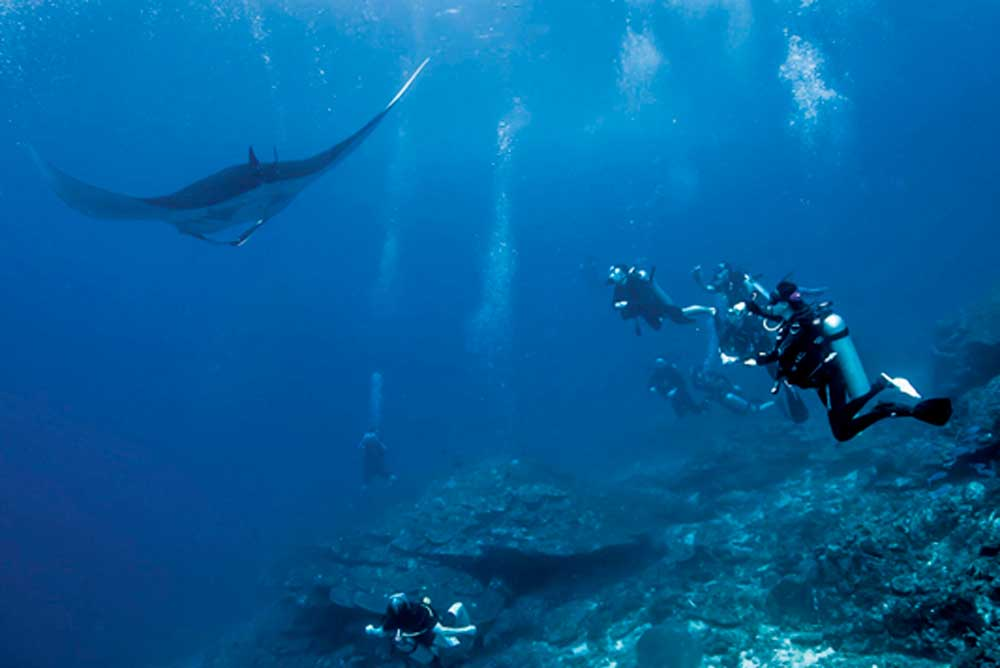 Divers watch a manta at Koh Bon in the Similan Islands National Park