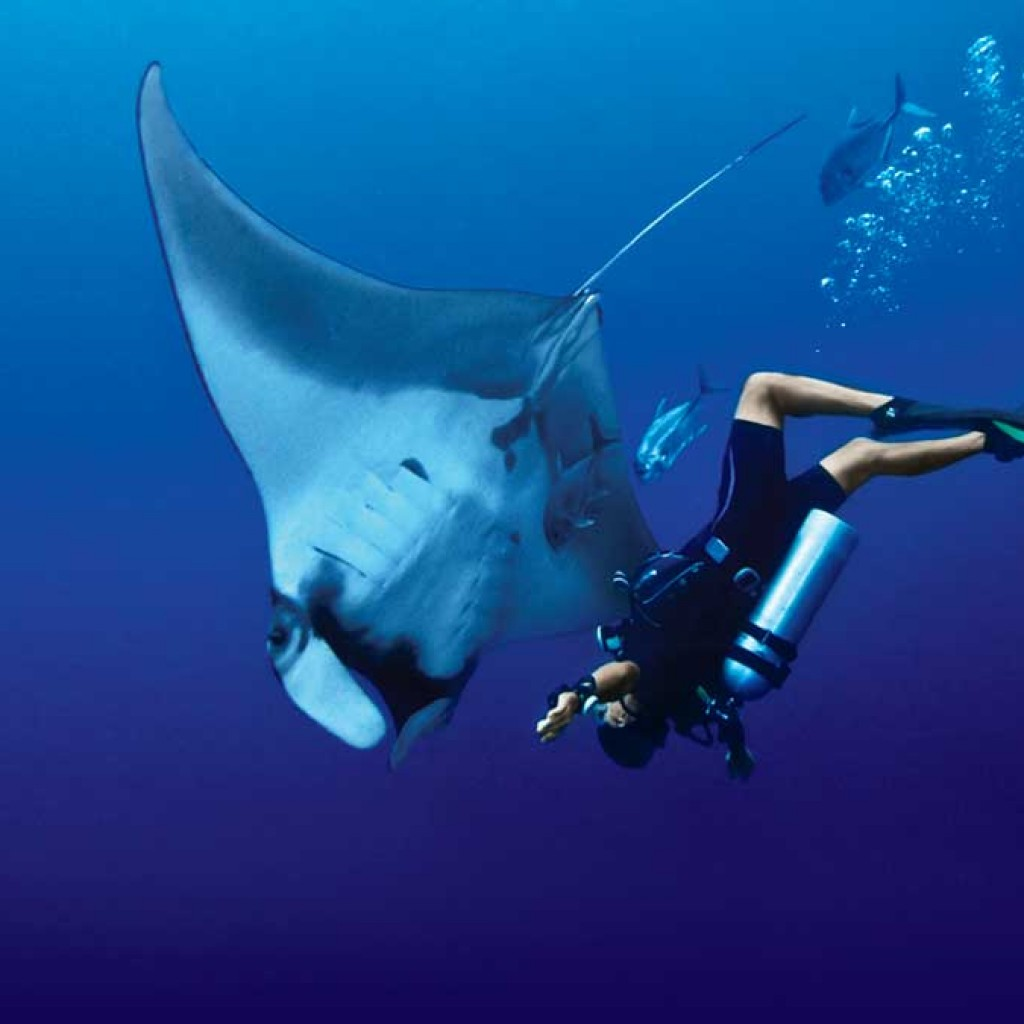 Manta Ray and diver at Koh Bon Thailand