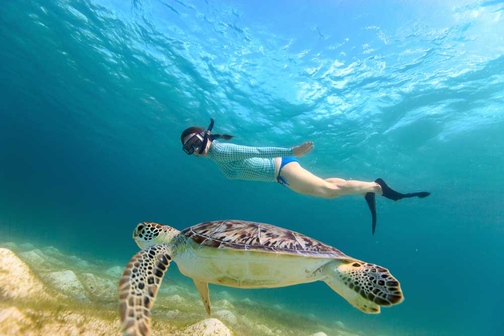 The best way to see turtles is to snorkel or dive with them in their natural environment off the shores of Khao Lak