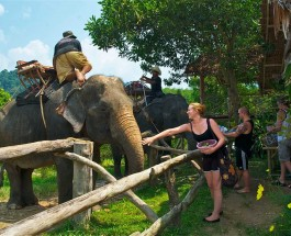 Khao Lak's Biggest Locals